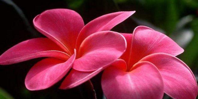 صورة زهور رائعة الجمال , اجمل الورود الطبيعية