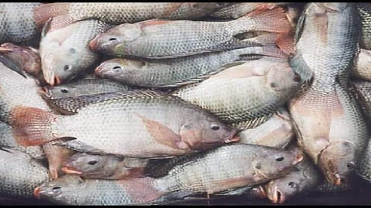 صورة السمك في المنام للحامل , دلائل رؤيه السمك فى المنام