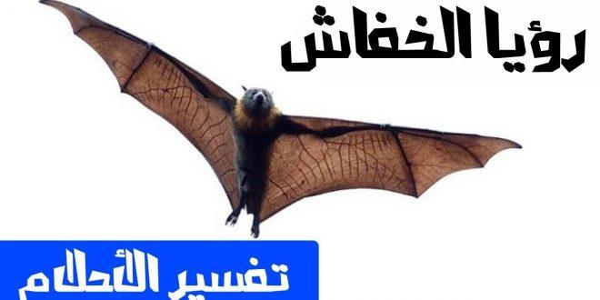 صور تفسير الاحلام الخفاش , اذا حلمت بالخفاش فهذا هو التفسير