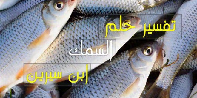 صورة تفسير حلم السمك البلطى , تفسير ابن سيرين لرؤية السمك