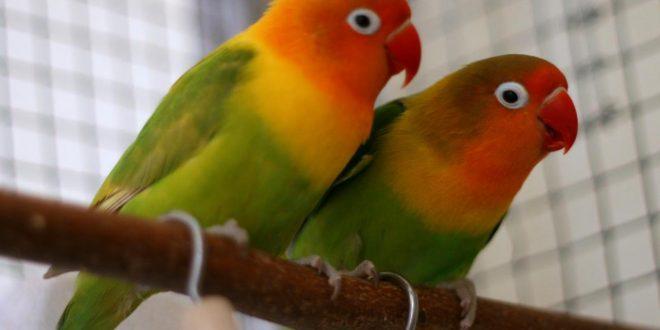 صور ما هو اكل العصافير , الطعام المفضل للعصفورة