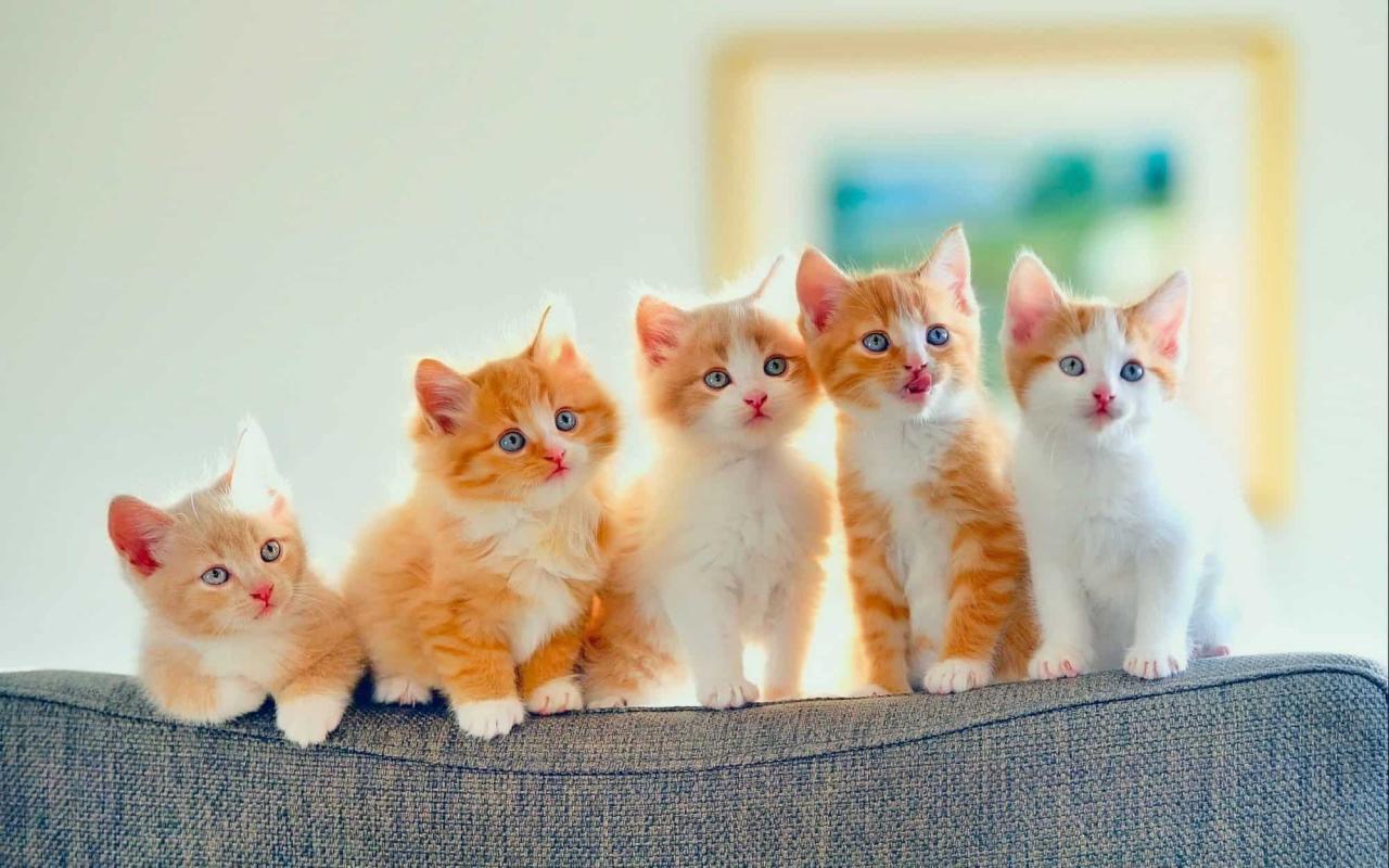 صورة كم تعيش القطط , عوامل مؤثرة فى عمر القطه