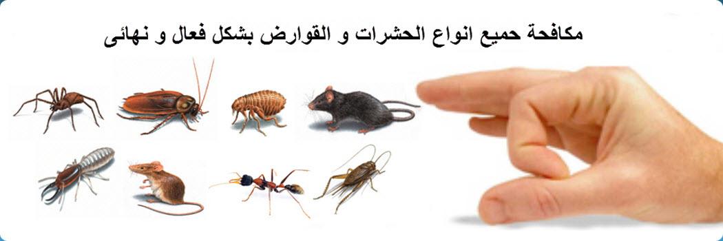 صورة طرق مكافحة الحشرات المنزلية , تخلصي من الصراصير للابد