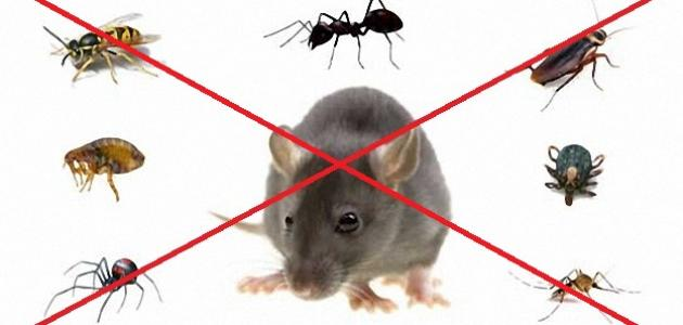 صورة طرق مكافحة الحشرات المنزلية , تخلصي من الصراصير للابد 2757