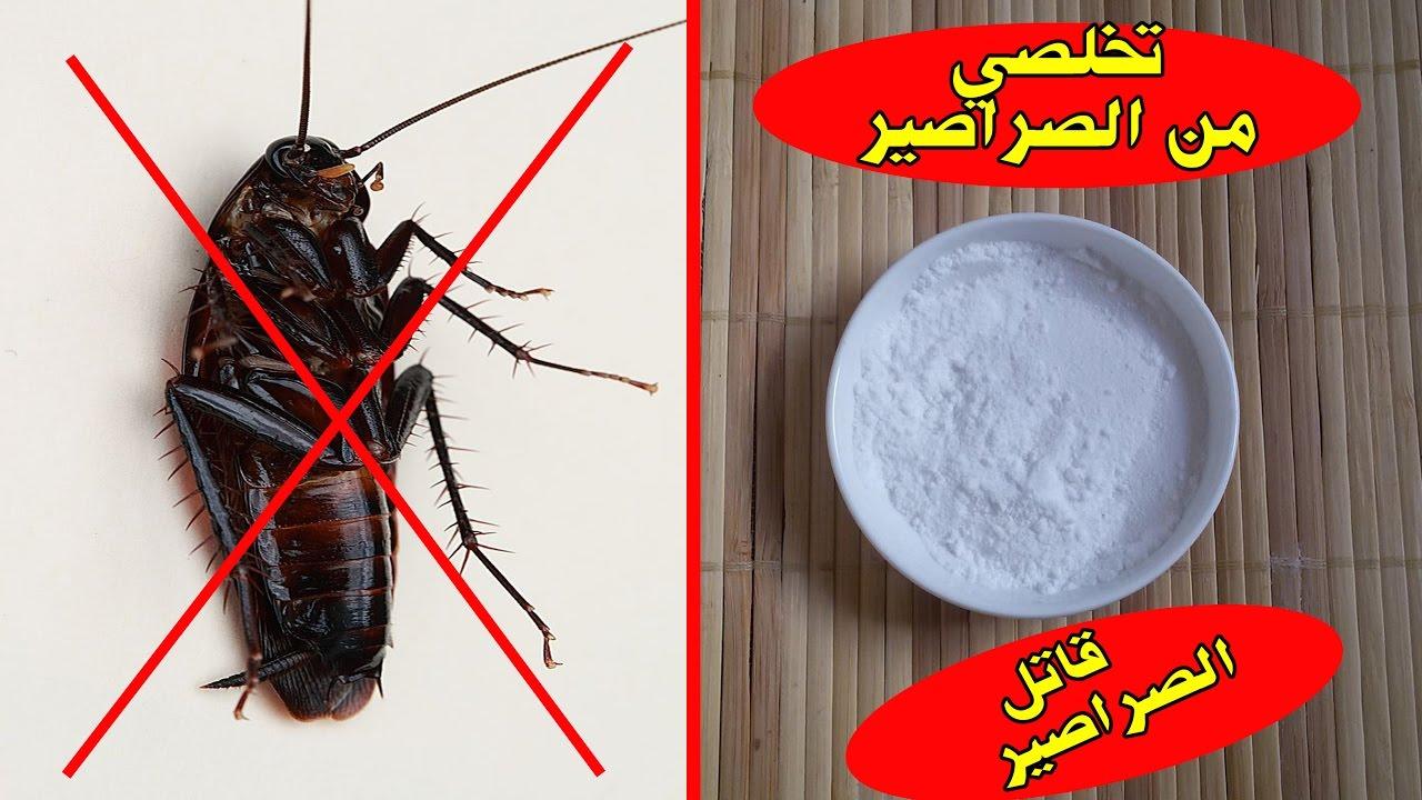 صورة كيف تتخلص من الصراصير , افضل طريقتين لخروج الصرصير نهائيا مالبيت