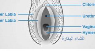 رسم توضيحي لمهبل فتاة عذراء , اشكال مهبل البنت