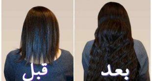 صور خلطة البيض لتطويل الشعر في اسبوع , ازاي تطولي و تتقلي شعرك في اقل وقت ممكن
