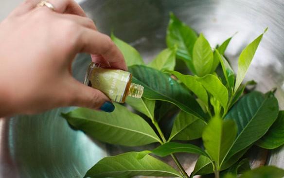 صورة طريقة طرد الناموس من المنزل , تخلصي من الناموس في منزلك للابد 2243 2