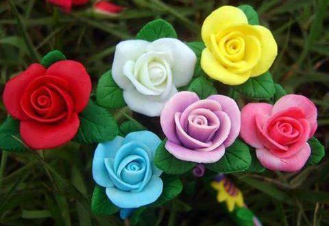 صورة صور لورود جميله , احلي وردة ممكن تشوفها في حياتك