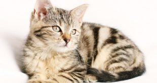 صورة تفسير الاحلام ال , رؤية القطط و دلالاتها