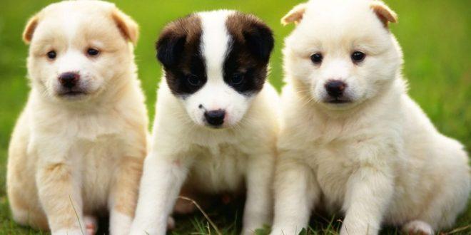 صورة اجمل الكلاب في العالم , صديق مخلص للانسان في الحياة