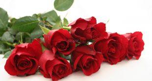 صورة صور ورد احمر , التعبير عن الحب بورده و احده