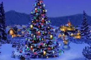 صورة صور اشجار عيد ميلاد , احتفل بعيد رائس السنة