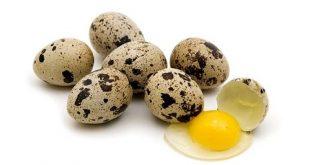 صورة فوائد بيض الفري , بيض السمان وفوايدة السحرية