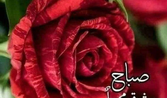 صورة صور صباح الخير حبيبي , احلي صور لحبيب قلبي في الصباح