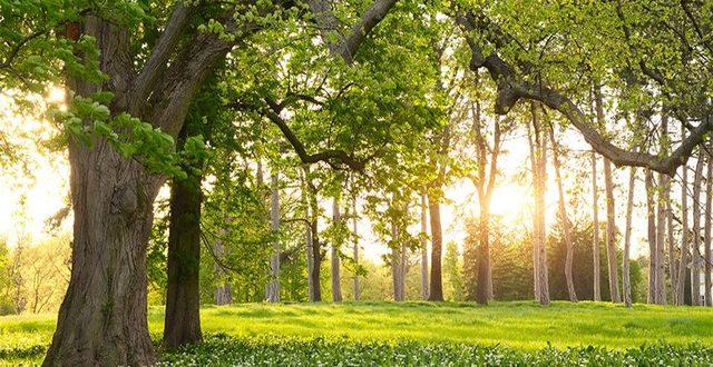 صورة صور اشجار طبيعيه , صور اشجار طبيعية رائعة جدا