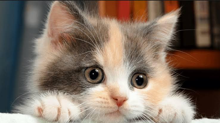 صورة معلومات عن القطط الصغيرة , تعرفوا علي كيفية التعامل معها