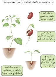 صورة معلومات عن النباتات , معلومات عن النباتات وانواعها