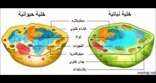 صورة الفرق بين الخلية النباتية والحيوانية , وما هي الفوائد العديدة التي تعبرها
