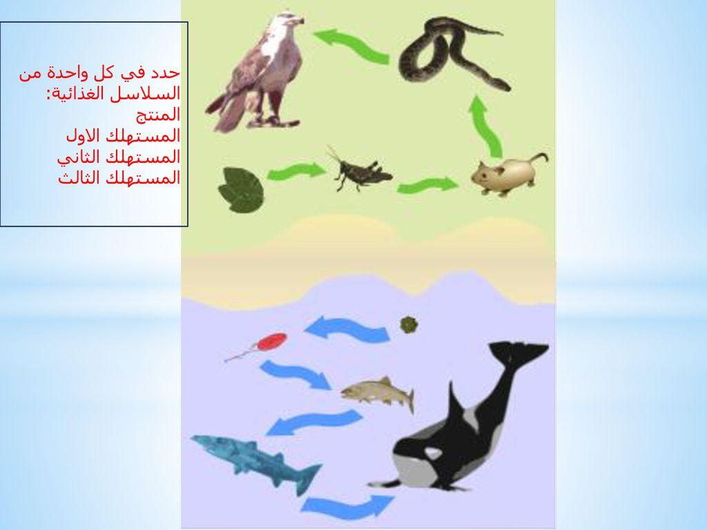 صورة سلاسل غذائية في بيئات مختلفة , الغذاء الصحيح للجسم